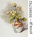 バラの花 36985792