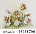 バラの花 36985796