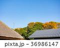 空 青空 屋根の写真 36986147