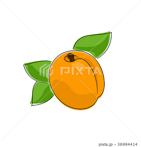 Apricot Isolated on White 36994414