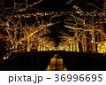 目黒川 イルミネーション クリスマスの写真 36996695