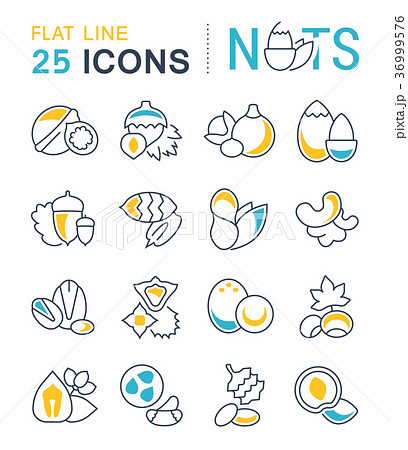 Set Vector Flat Line Icons of Nuts 36999576