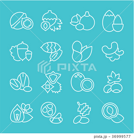 Set Vector Flat Line Icons of Nuts 36999577