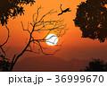 樹木 樹 ツリーの写真 36999670