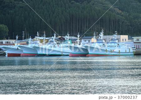 カツオ船 目井津港 37000237