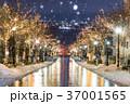 函館 八幡坂 イルミネーションの写真 37001565