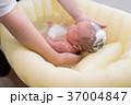 沐浴 37004847