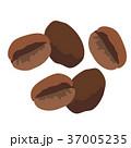 コーヒー豆 イラスト 37005235