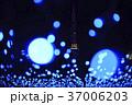 さっぽろホワイトイルミネーション 札幌ホワイトイルミネーション 光の写真 37006203