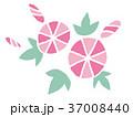 アサガオ(ピンク) 37008440