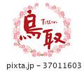 鳥取 筆文字 桜 フレーム 37011603