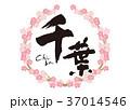 千葉 筆文字 桜 フレーム 花見 37014546