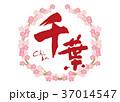 千葉 筆文字 桜 フレーム 花見 37014547