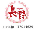 筆文字 桜 花のイラスト 37014629