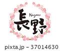 筆文字 桜 花のイラスト 37014630