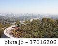 ゲッティ美術館から見下ろすロサンゼルスとサボテン:Getty Center 37016206