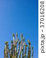 ゲッティ美術館のサボテン:Cacti at Getty Center 37016208