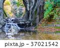 【千葉県】濃溝の滝 37021542