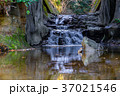 【千葉県】濃溝の滝 37021546