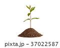 グリーン 緑 緑色の写真 37022587