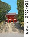 近江神宮の桜 37024923