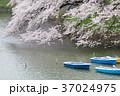 東京_桜満開の千鳥ヶ淵 37024975