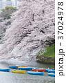 千鳥ヶ淵 桜 満開の写真 37024978