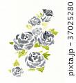 薔薇 花 水彩のイラスト 37025280