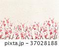 梅 春 花のイラスト 37028188