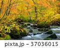 青森_紅葉の奥入瀬渓流 37036015