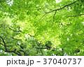 新緑 エコ 背景の写真 37040737