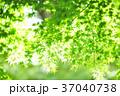 新緑 エコ 背景の写真 37040738