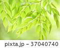 新緑 エコ 緑の写真 37040740