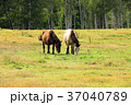 9月 秋の木曽馬の里 37040789