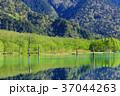 長野_新緑の上高地大正池 37044263