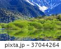 長野_新緑の上高地大正池 37044264
