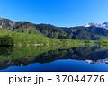 長野_新緑の上高地大正池 37044776