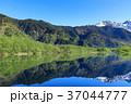 長野_新緑の上高地大正池 37044777