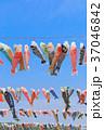 鯉のぼり 端午の節句 子供の日の写真 37046842