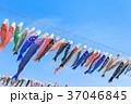 鯉のぼり 端午の節句 子供の日の写真 37046845