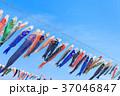 鯉のぼり 端午の節句 子供の日の写真 37046847
