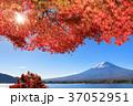 富士山 秋 紅葉の写真 37052951
