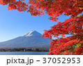 富士山 秋 紅葉の写真 37052953