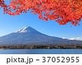 富士山 秋 紅葉の写真 37052955