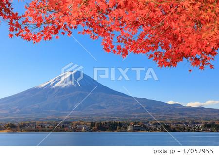 紅葉映える新雪の富士山 37052955