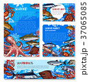シーフード 海の幸 魚介類のイラスト 37065085