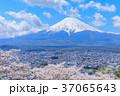 山梨_富士山と満開の桜 37065643