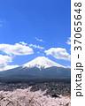 富士山 桜 満開の写真 37065648