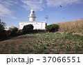 城ヶ島灯台 神奈川県 三浦市 37066551