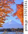 富士山 河口湖 河口湖畔の写真 37071541